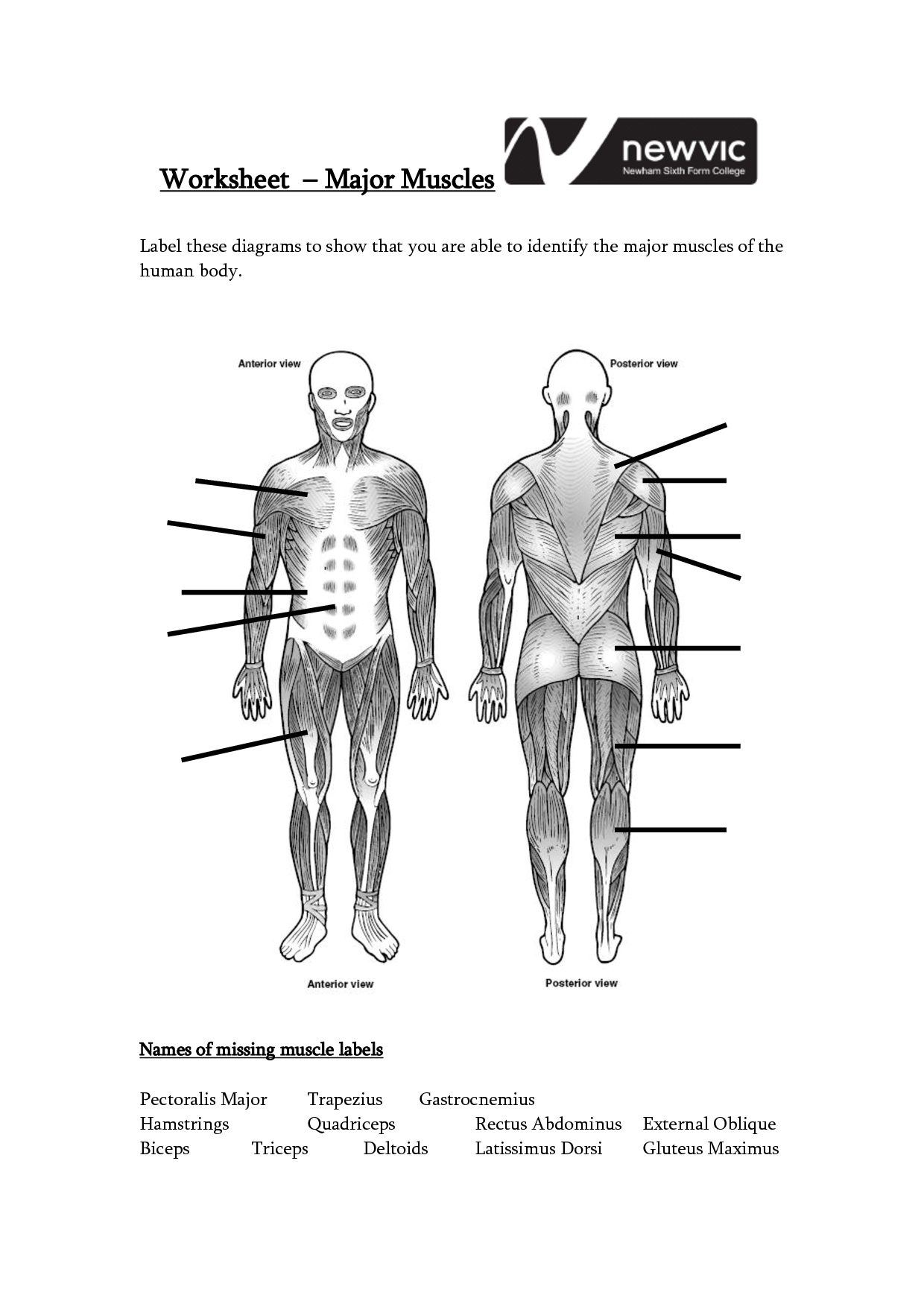 Muscle Diagram Worksheets – craftbrewswag.info